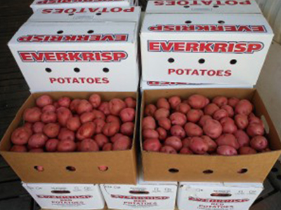 EverKrisp Vegetables Inc.